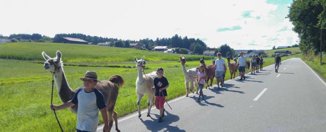 Wölflinge bei einer Lamawanderung